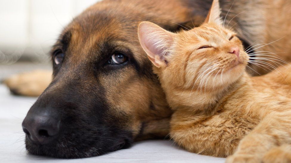 Judging the security or the nutritional worth of a pet food